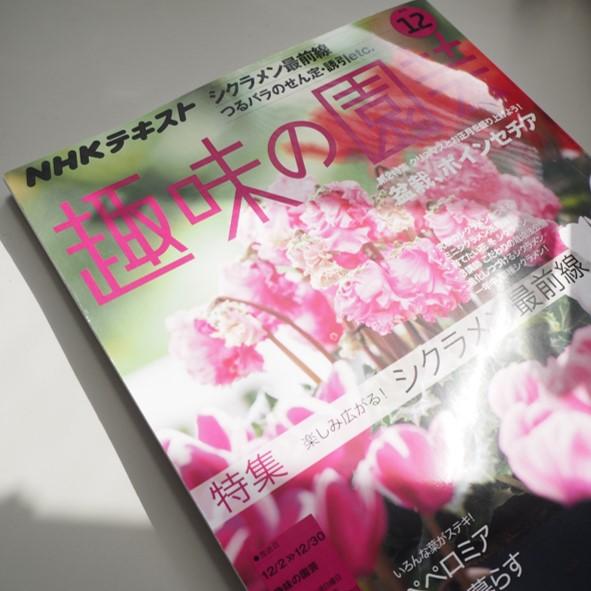 趣味の園芸12月号に腰岡教授が掲載されました