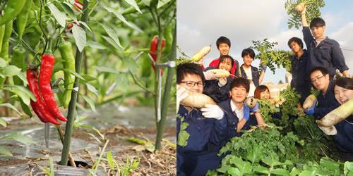 野菜類の品種改良と生産技術の開発