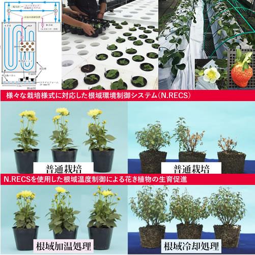 様々な栽培様式に対応した根域環境制御システム(N.RECS)