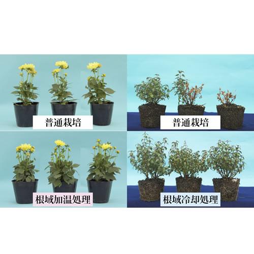 N.RECSを使用した根域温度制御による花き植物の生育促進