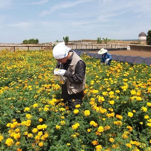 身近な場所、環境、生物を調査することで、害虫に対して有用な病原微生物を発見する
