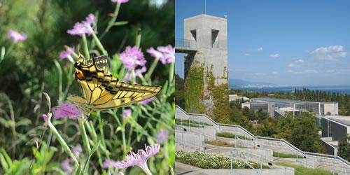 都市と農村の生物多様性保全のための緑地計画・管理に関する研究